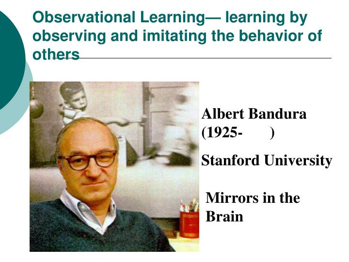 Observational Learning— learning by observing and imitating the behavior of others