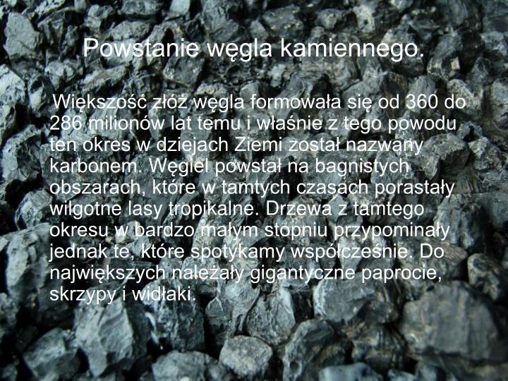 Powstanie węgla kamiennego.