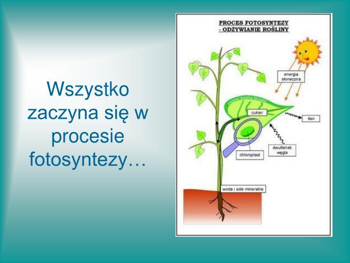 Wszystko zaczyna się w procesie fotosyntezy…