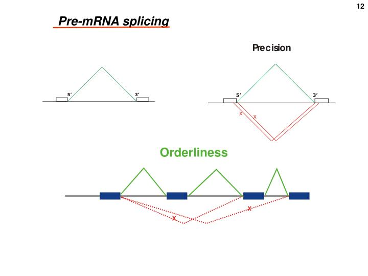 Pre-mRNA splicing