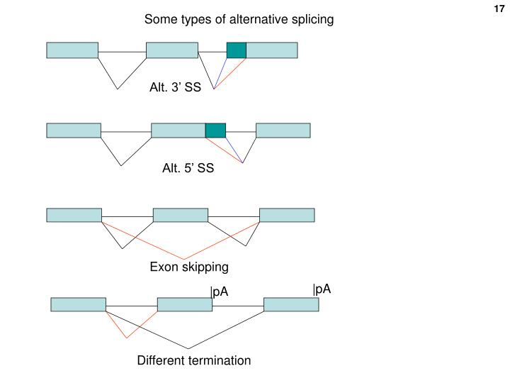 Some types of alternative splicing