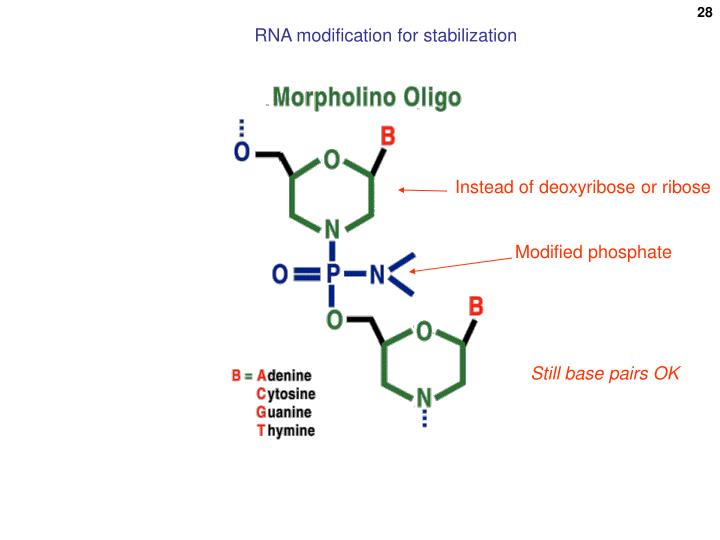 RNA modification for stabilization