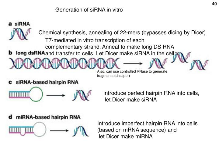 Generation of siRNA in vitro