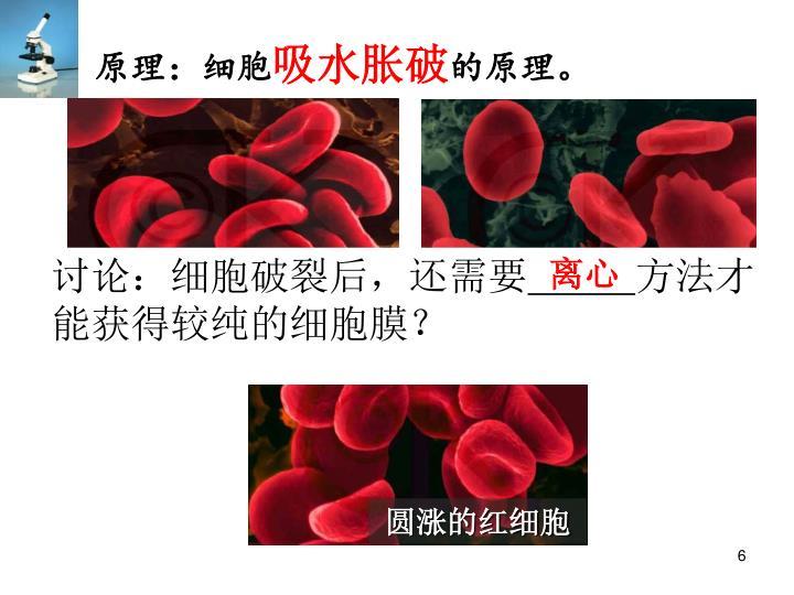 正常的红细胞