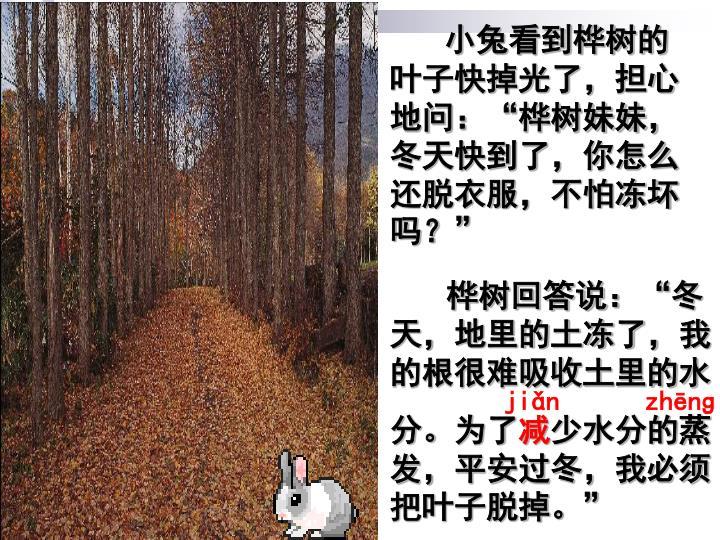 """小兔看到桦树的叶子快掉光了,担心地问:""""桦树妹妹,冬天快到了,你怎么还脱衣服,不怕冻坏吗?"""""""