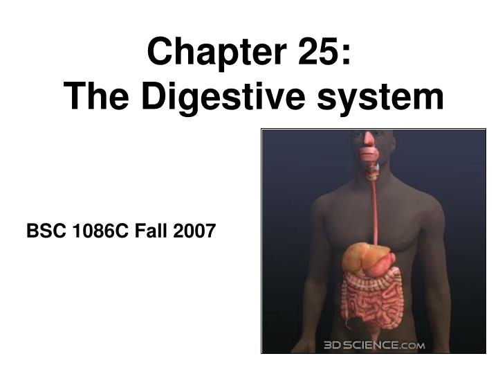 Chapter 25 the digestive system