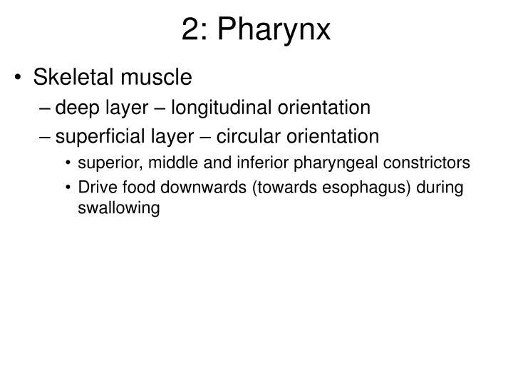 2: Pharynx