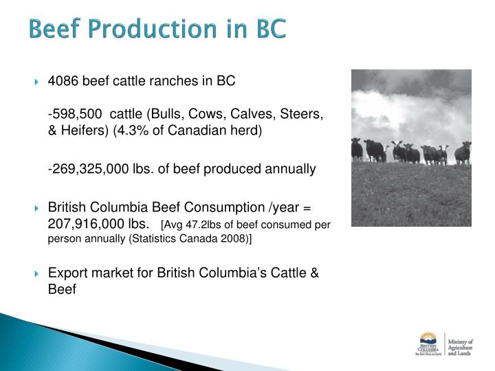 Beef Production in BC