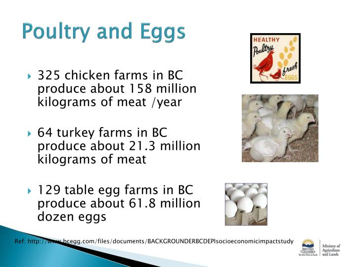 Poultry and Eggs