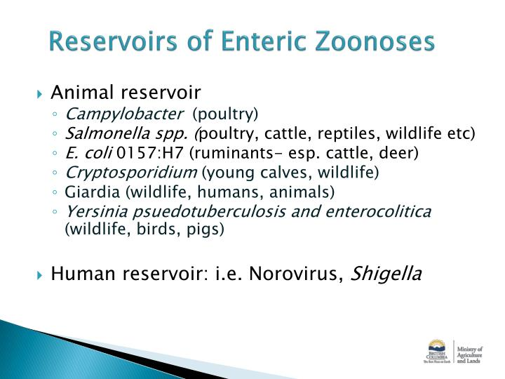 Reservoirs of Enteric