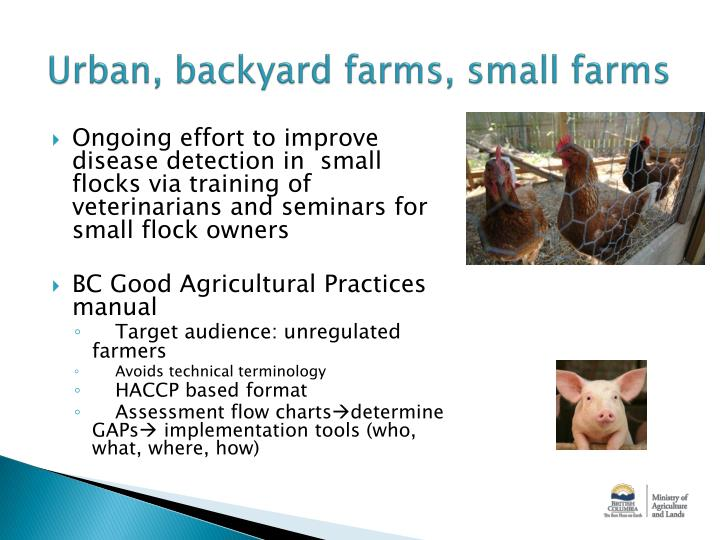 Urban, backyard farms, small farms