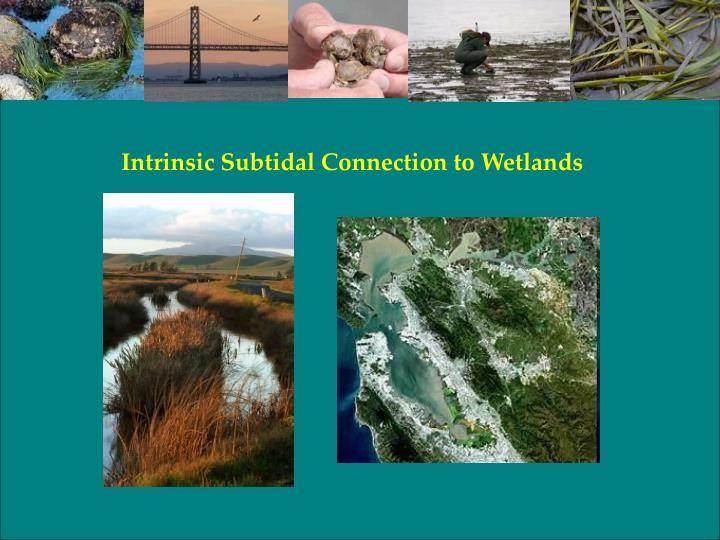 Intrinsic Subtidal Connection to Wetlands
