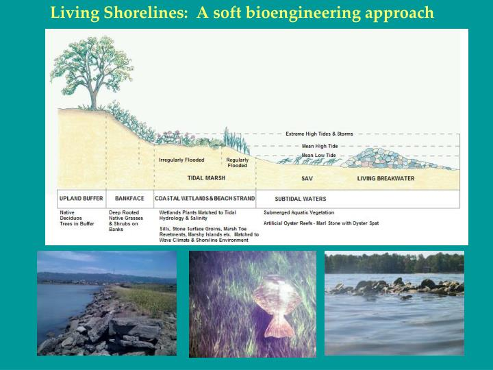 Living Shorelines:  A soft bioengineering approach