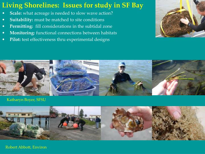 Living Shorelines:  Issues for study in SF Bay