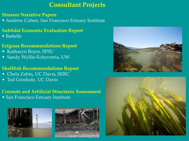 Consultant Projects