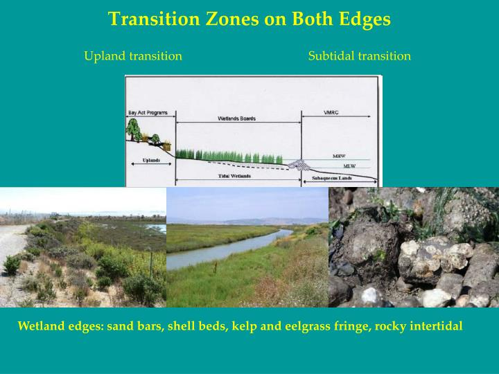 Transition Zones on Both Edges