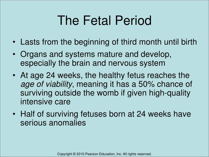 The Fetal Period