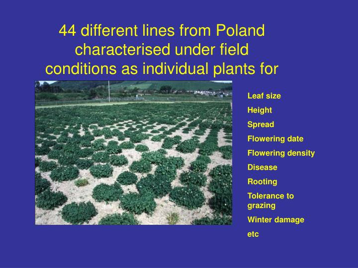 44 different lines from Poland characterised under field conditions as individual plants for