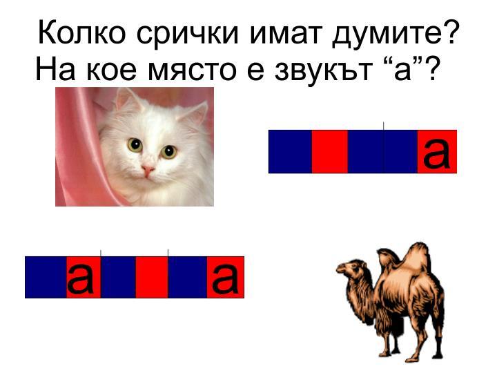 Колко срички имат думите?