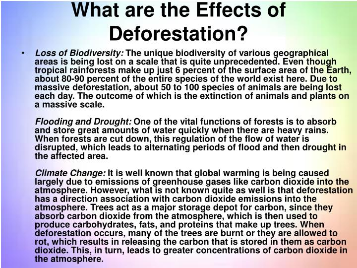 What are the Effects of Deforestation?