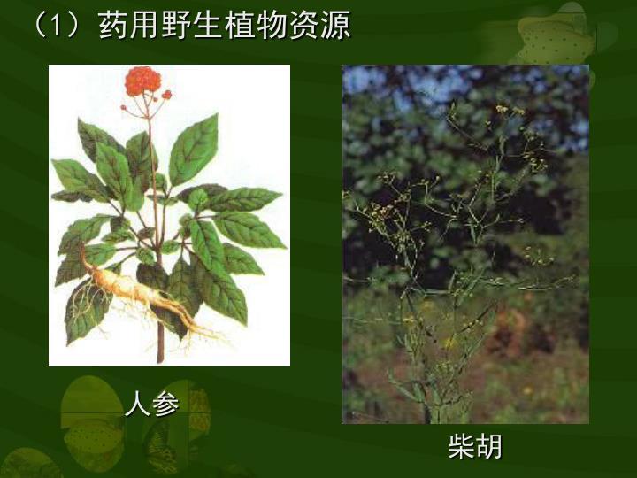 (1)药用野生植物资源