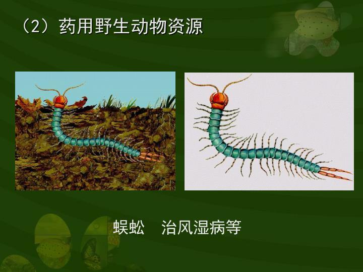 (2)药用野生动物资源