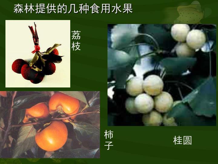 森林提供的几种食用水果