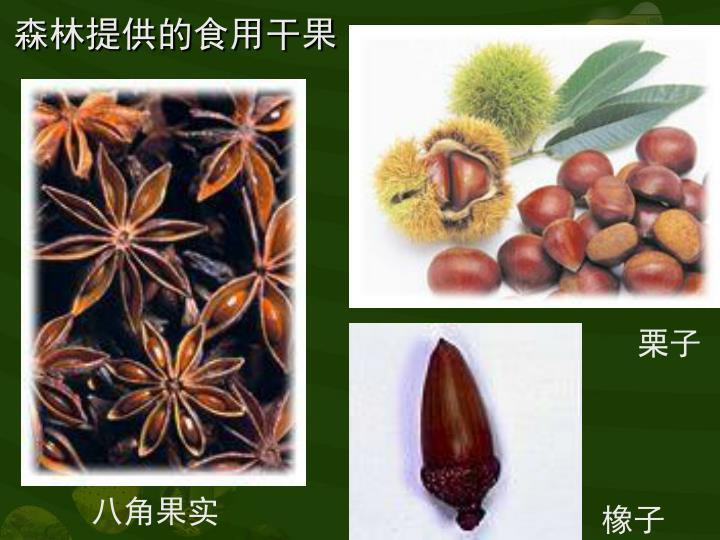森林提供的食用干果