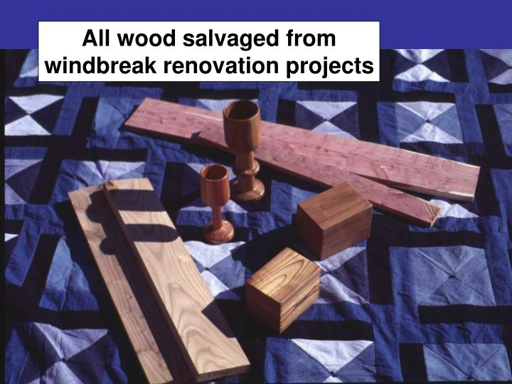 All wood salvaged from windbreak renovation projects