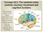 concept 49 3 the cerebral cortex controls voluntary movement and cognitive functions