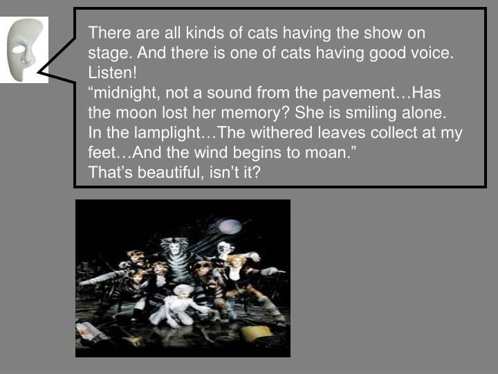 There are all kinds of cats having the show on stage. And there is one of cats having good voice. Listen!