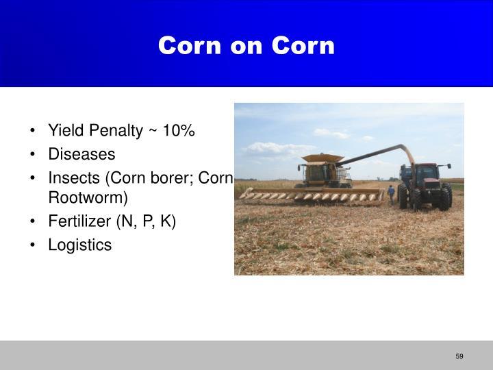 Corn on Corn