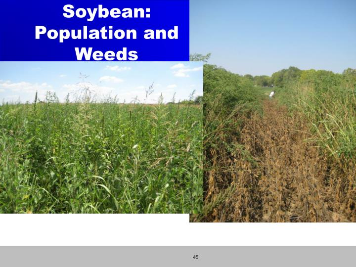 Soybean: Population and Weeds