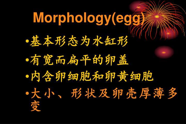 Morphology(egg)