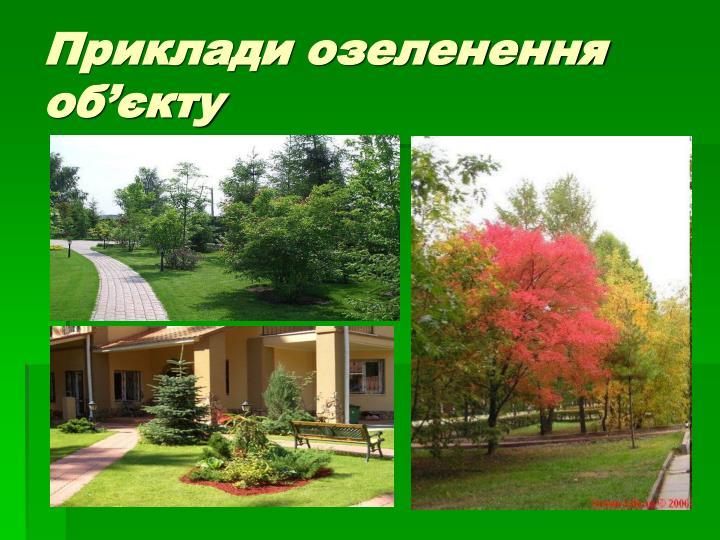 Приклади озеленення об'єкту