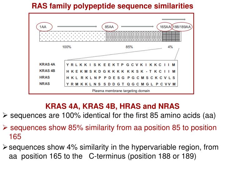 RAS family polypeptide sequence similarities