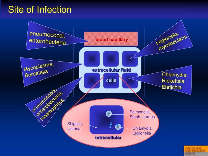 pneumococci, enterobacteria