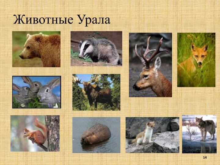 Животные Урала