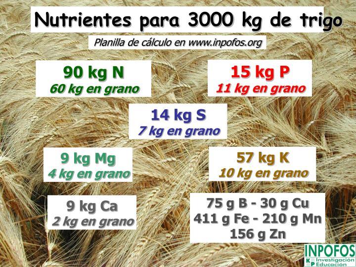 Nutrientes para 3000 kg de trigo