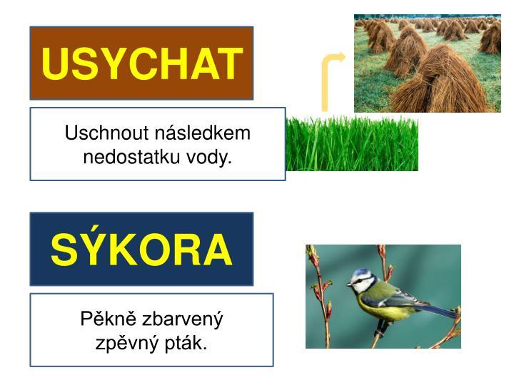 USYCHAT