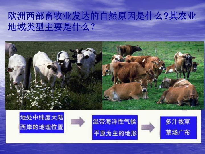 欧洲西部畜牧业发达的自