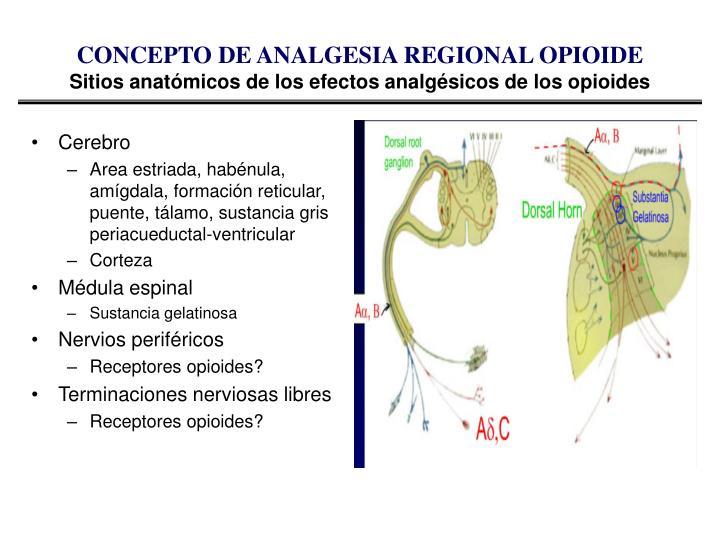CONCEPTO DE ANALGESIA REGIONAL OPIOIDE