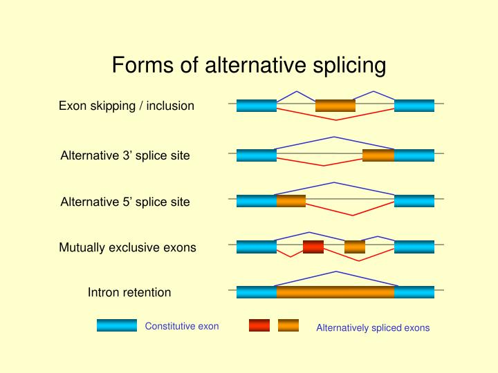 Forms of alternative splicing