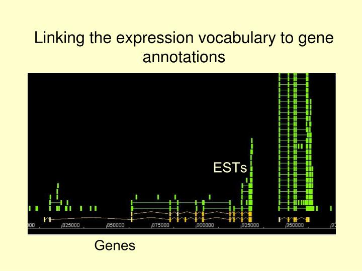 Linking the expression vocabulary to gene annotations