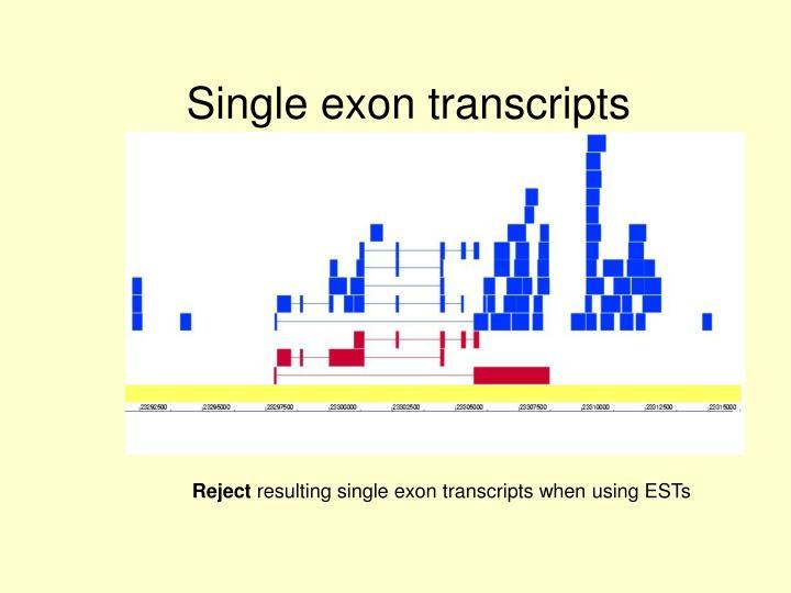 Single exon transcripts