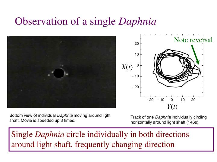 Observation of a single
