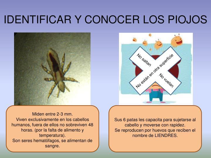 IDENTIFICAR Y CONOCER LOS PIOJOS