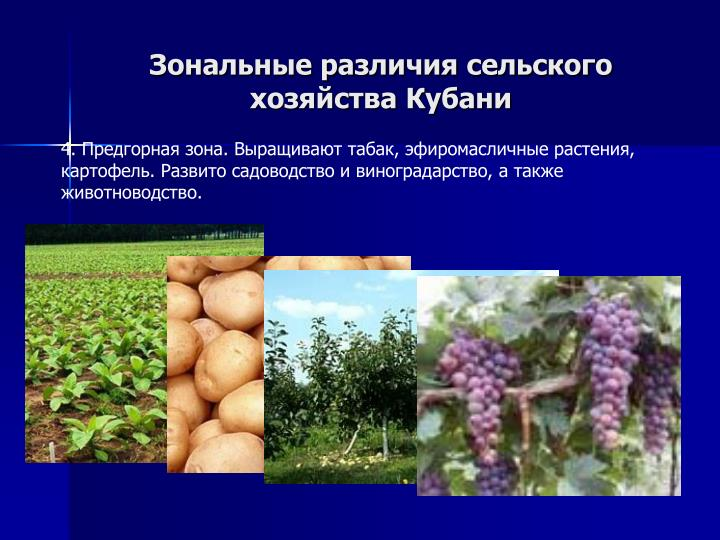 Зональные различия сельского хозяйства Кубани
