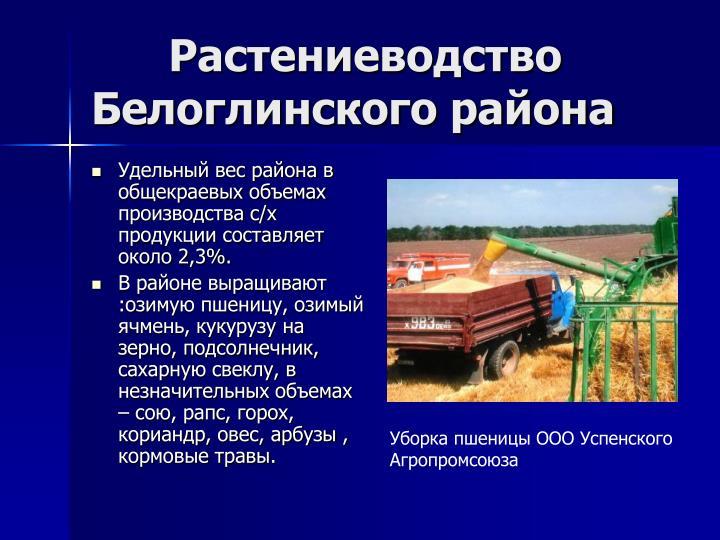 Растениеводство Белоглинского района