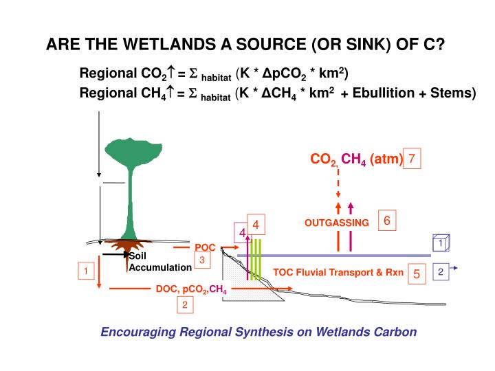ARE THE WETLANDS A SOURCE (OR SINK) OF C?